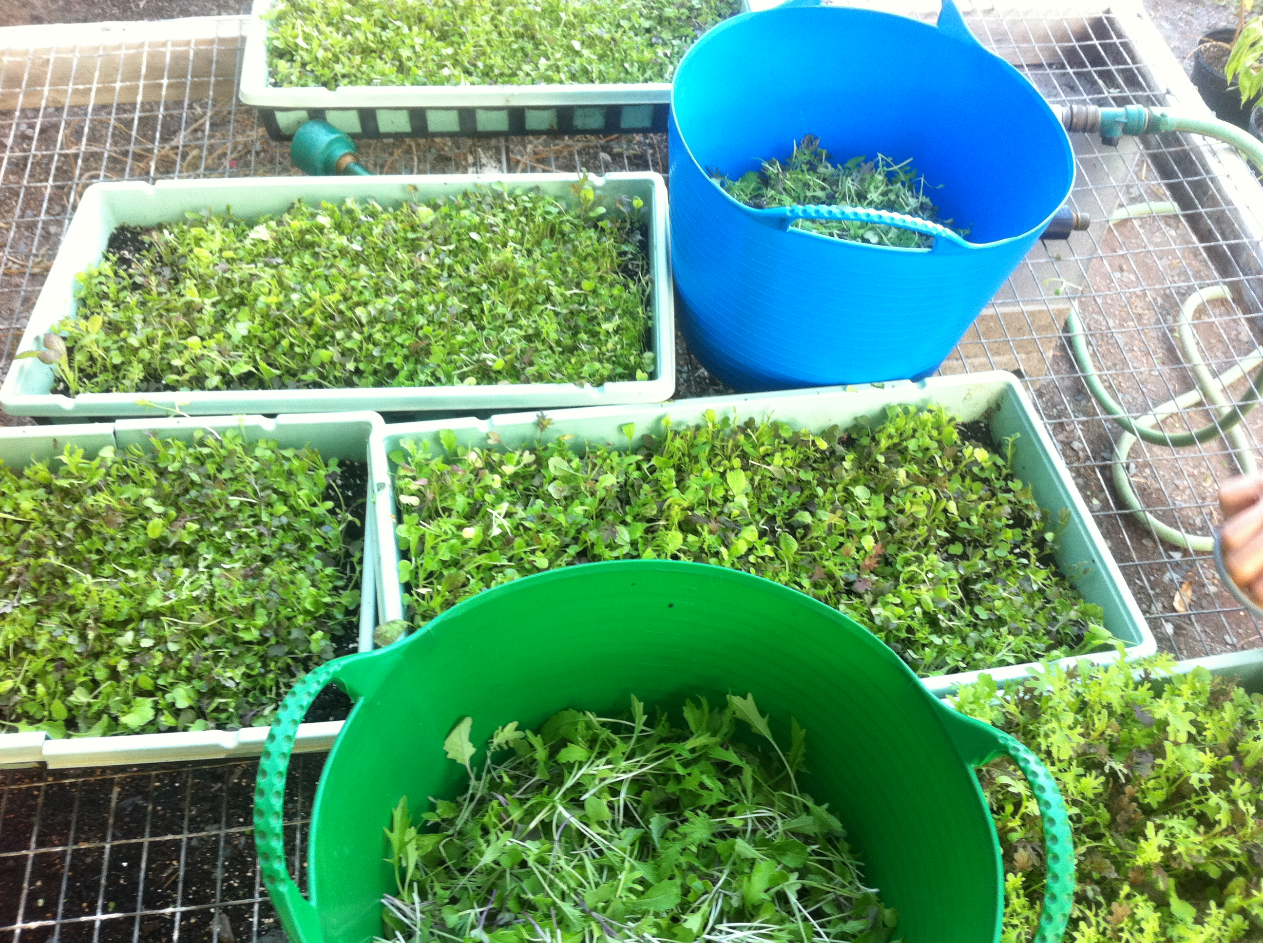 Image result for microgreens packaging